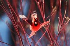 Untbird